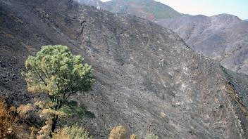 After the 2015 Wragg Fire