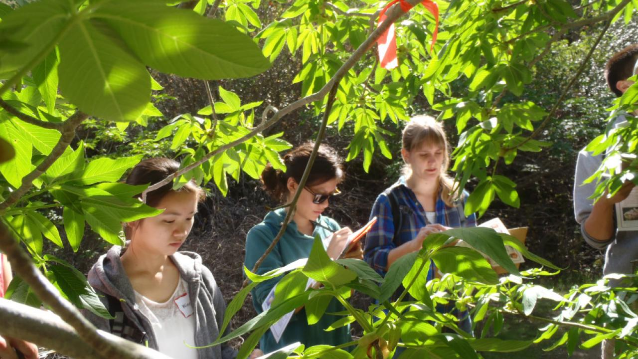 Citizen science at Stebbins Cold Canyon